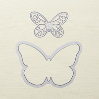 bold-butterflys